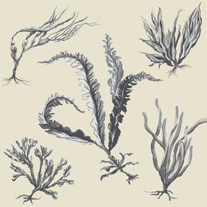 grey_seaweed2