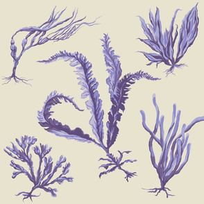 purple_seaweed2