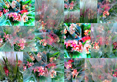 BOUQUET_COLLAGE_FILTRI