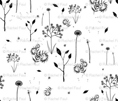 beautiful weeds on white