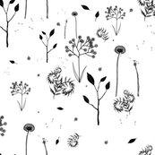 Rwildflower_on_white_shop_thumb