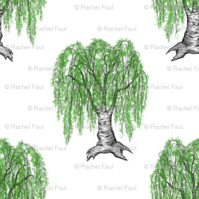 weeping cutleaf birch