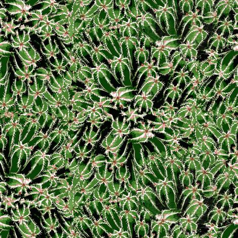 kaktusallover2
