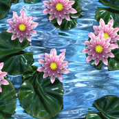 The Waterlilies