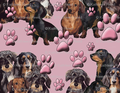 doxies and pawprints