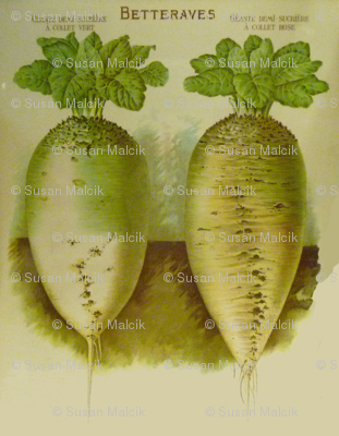 White French Beets