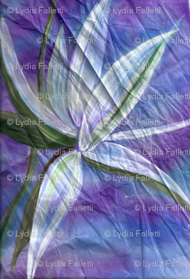 Blue, purple, white bird of pardise