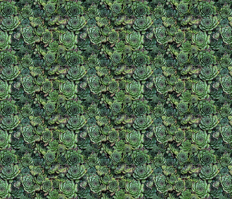 Hens and Chicks fabric by the_fretful_porpentine on Spoonflower - custom fabric