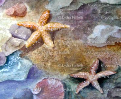 Starfish 2  designed by Lydia Falletti