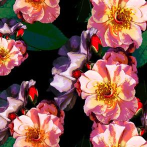 roses_galore