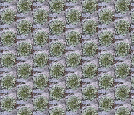 lichen fabric by yellowee on Spoonflower - custom fabric