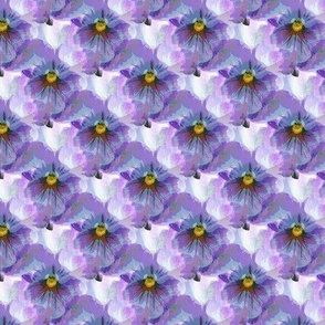 Blue violet pansy (s)