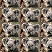 Rrrrrkoala_shop_thumb