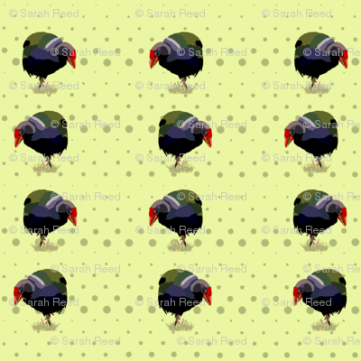 Takahe Birds