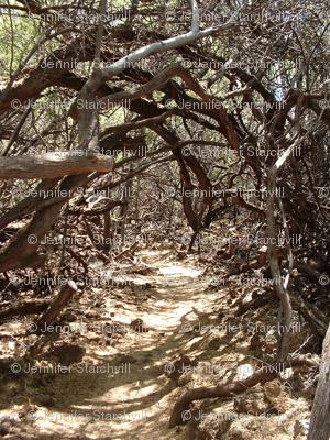 Petroglyph Path
