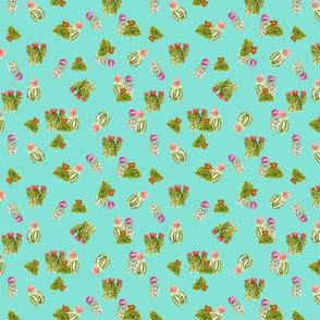 cactusfamily14