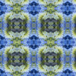 Blue Hydrangea_9154