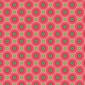 hakea pink