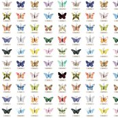 Rsmall_butterfly_shop_thumb