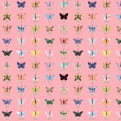 Rsmall_butterfly_pink_shop_thumb