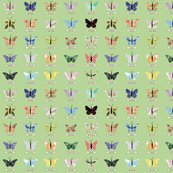 Rsmall_butterfly_green_shop_thumb