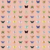 Rsmall_butterfly_peach_shop_thumb