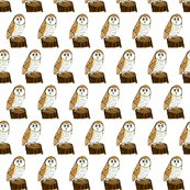 Rrrrbarnowl_copy_shop_thumb