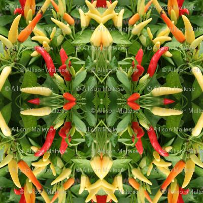 Chili Pepper Circle_0430