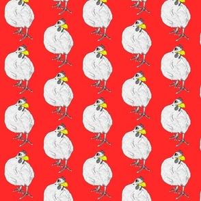 chicken_yellow_beak