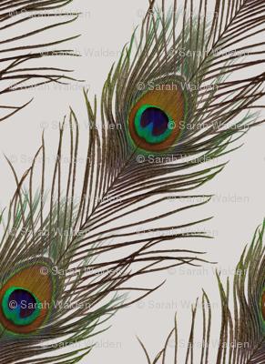 Silver Peacock Stripe
