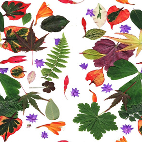 Autumn leaves & flowers collage