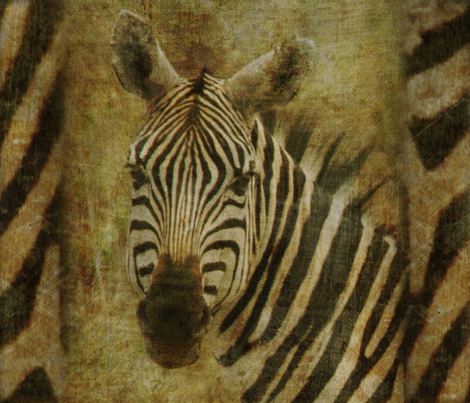 AMBOSELI KENYA zebra fabric by bzbdesigner on Spoonflower - custom fabric