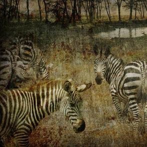 AMBOSELI KENYA zebra