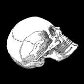 Rrrrside_skull_up_black_shop_thumb