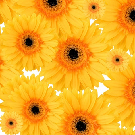 a happy gnome / Sunflowers on white fabric by paragonstudios on Spoonflower - custom fabric