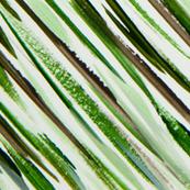 Pattern Of Nature