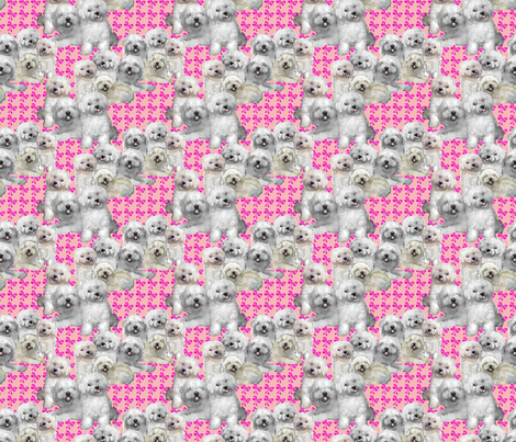 bolognese_dog_fabric fabric by dogdaze_ on Spoonflower - custom fabric