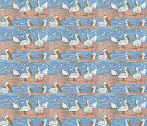 swimming pelicans