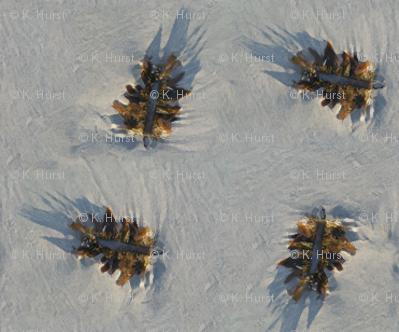Seaweed on sand