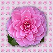 Rrrcamellia-pattern_shop_thumb
