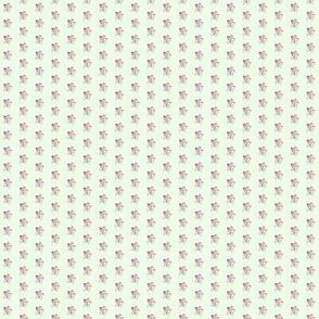 Campanula-tiny_