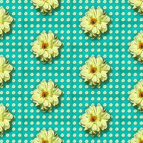 Dahlia-pattern
