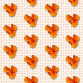 poppy_-pattern