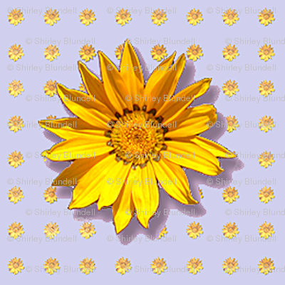 sunflower2-pattern_