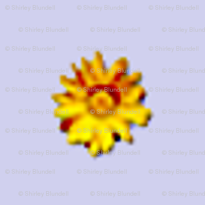sunflower2-tiny_