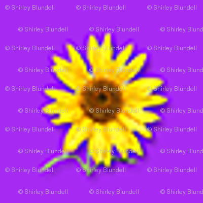 sunflower-tiny_