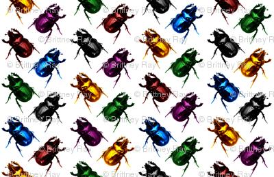 Jewel & Black Beetles