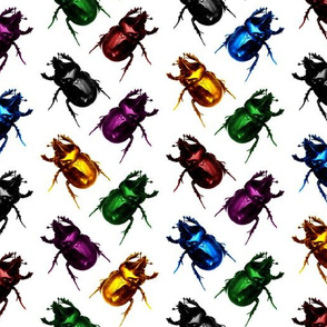 Jewel & Black Beetles