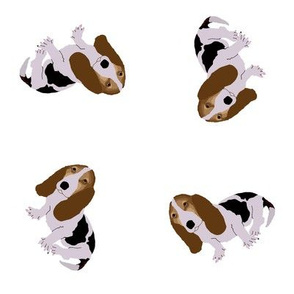 Basset Hound Tossed on White (Small)