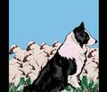 Rrrborder_collie_garden_flag_upload_comment_208213_thumb